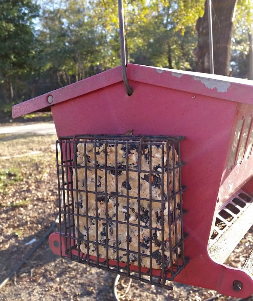 Homemade Suet in bird feeder.intelligentdomestications.com