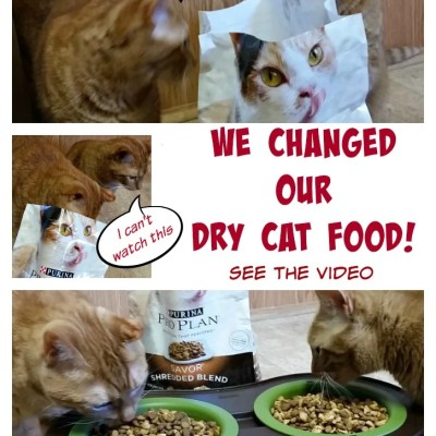 We Changed Our Dry Cat Food, See The Reaction!