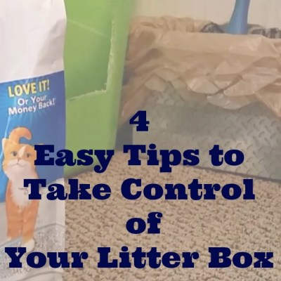 4 Easy Tips To Take Control of Your Litter Box