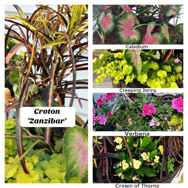 A list of the perennial plants in my Fairy Garden. My Fairy Garden Tour 2016. Fairy Garden Ideas. Flowers to use in a flower garden. #fairygarden #gnomes #fairygardenideas