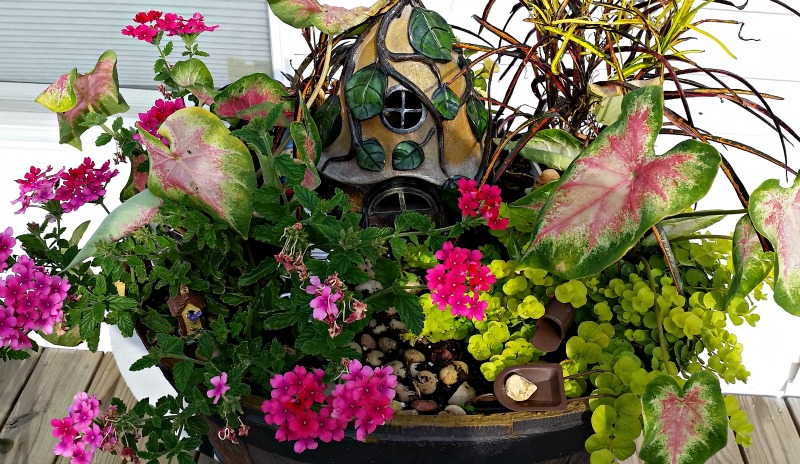 Our 2016 Fairy Garden. The flowers are taking over and that's cool since Fairy's like to hide in their gardens
