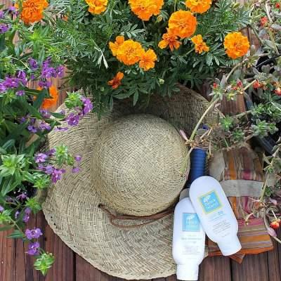 15 Plus Best Annual Flowers for Full Sun