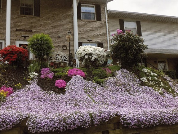 Create the wow factor with flowering shrubs and ground covers