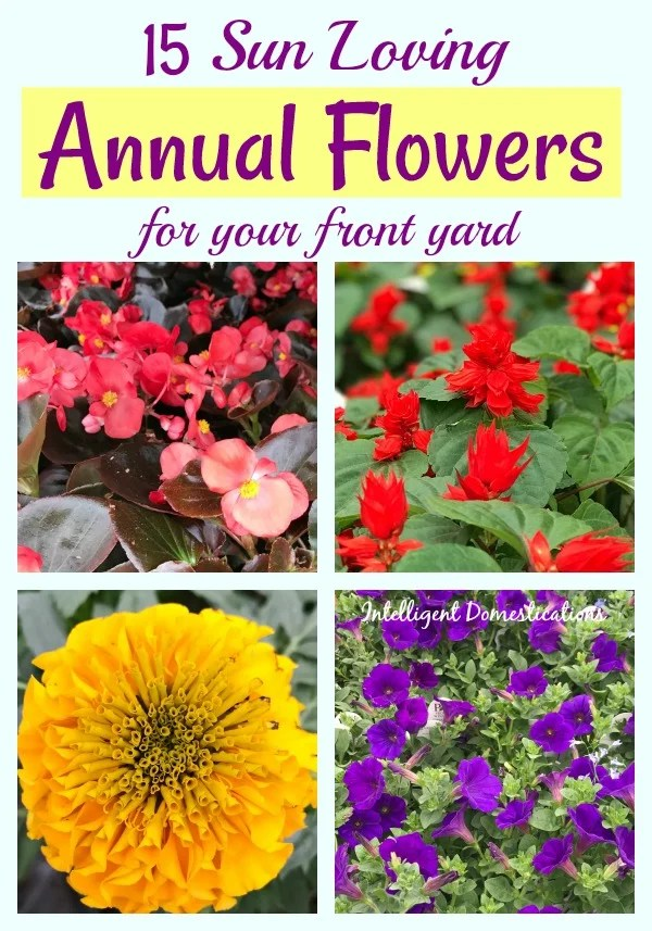 Sun Loving Annual Flowers to plant in your front yard this Spring. Curb appeal includes planting colorful flowers. See this list of Annual Flowers to plant full sun. #flowers #curbappeal