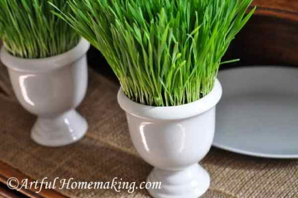 How to grow wheat grass for home decor. Welcome Spring Blog Hop Feature