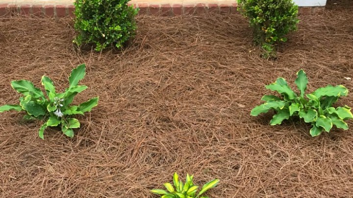 Tips for adding curb appeal to your front yard. #curbappeal