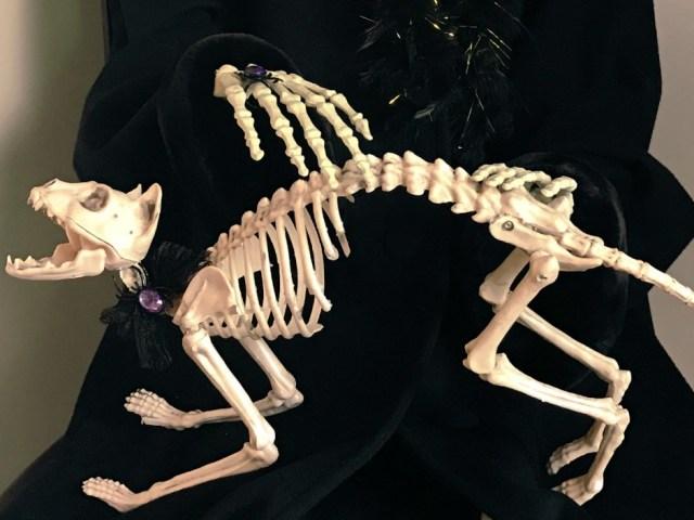 Skeleton Cat Halloween decor. Skeleton Halloween Party Decorations. A Halloween fun party theme with skeleton decor in black, white and cream colors. Not too scary. #halloweenparty #skeletonparty #skeletonsquad