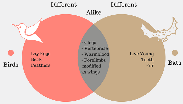 Venn Diagram Examples With Solutions Engneforic
