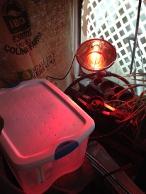 Mealworm Farm Heat Lamp