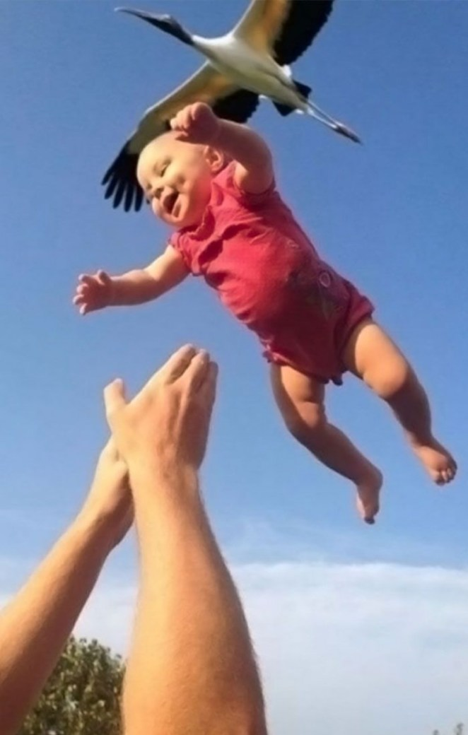 Funny photo of stork dropping baby