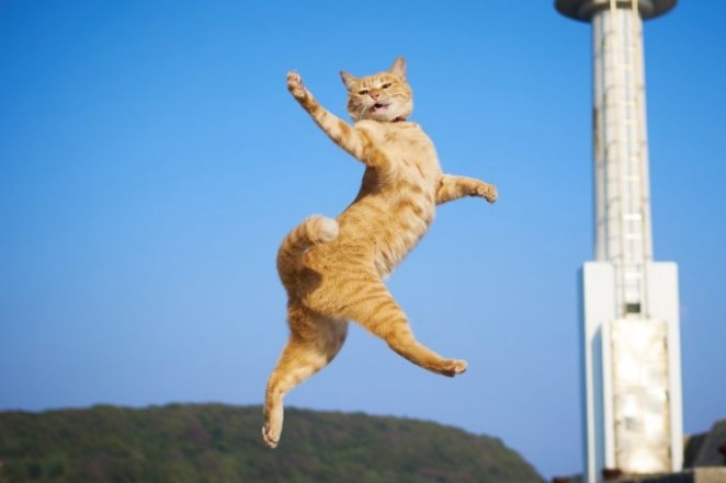 Funny photo of jumping cat