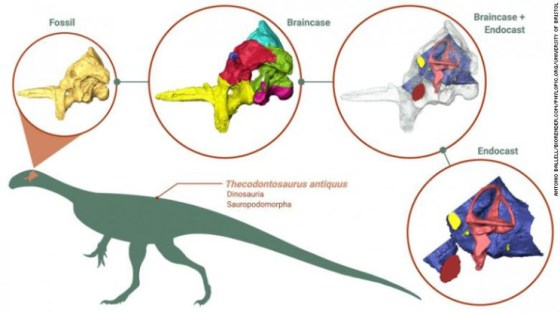 Brain scientists picked up one of the oldest dinosaurs