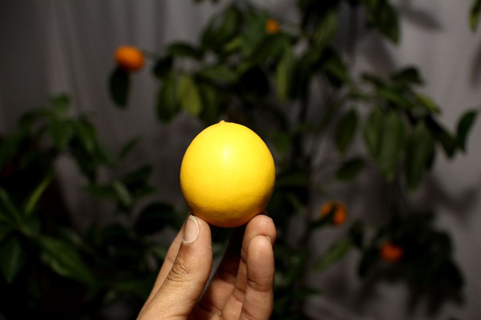 I Picked My First Lemon © Andor (2)