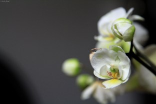 Orchids © Andor (2)