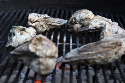 Attacking Oysters © Andor (1)