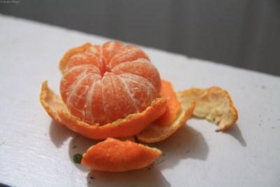 First Satsuma Mandarin of 2013 © Andor (2)