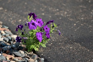 My Friend's Flowers © Andor (6)