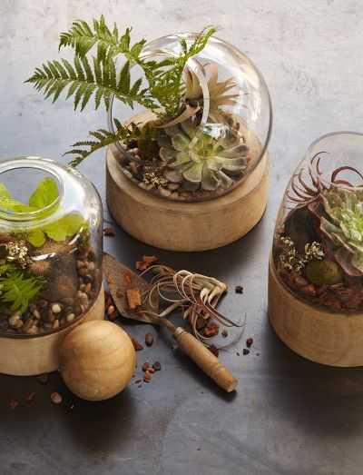 West Elm -Glass Terrariums + Wood Base