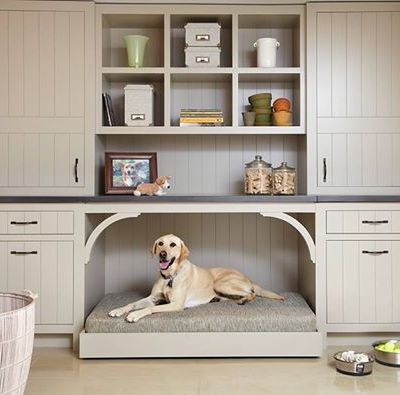 Dog Friendly Decorating Photo's