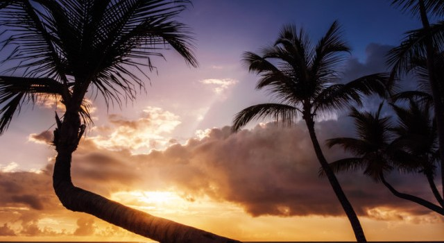 image of palm trees and ocean at Dominican Republic Wellness Retreat with Cindy Newland of Intentionally Eat