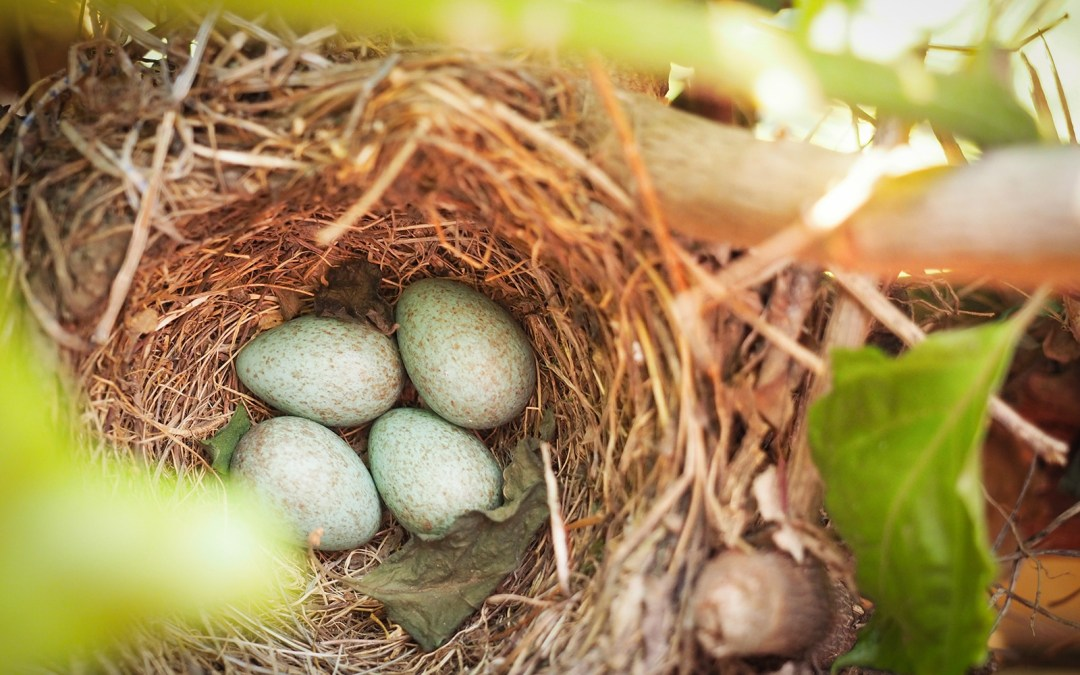 20 tips to ensure a nice nest egg in 20 years