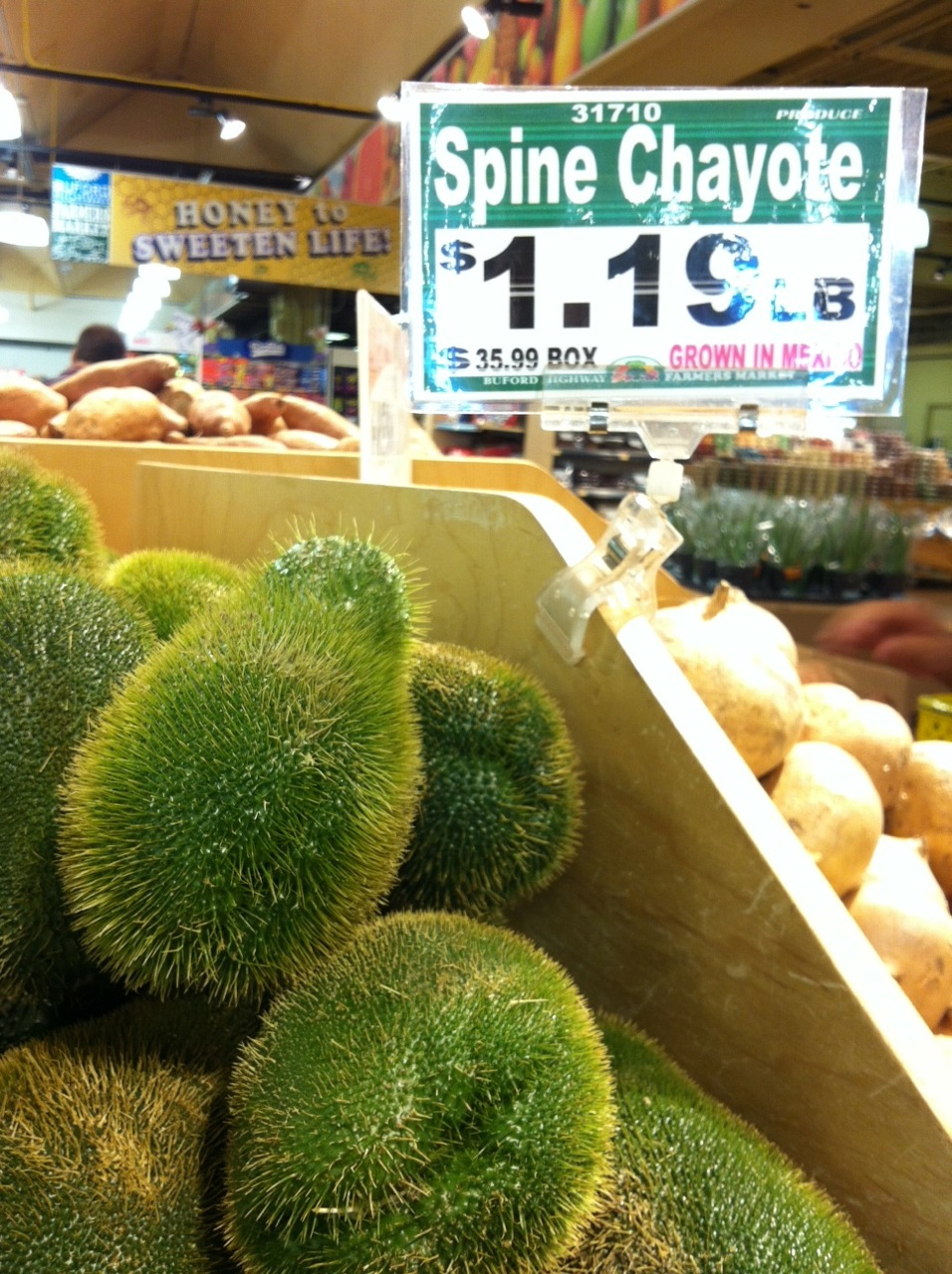 "spine chayote (or ""chocho"" in Jamaica)"