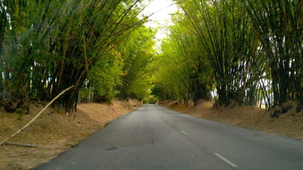 Bamboo Ave on South Coast Hwy near Appleton