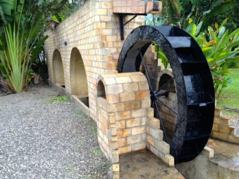Appleton, Best of Jamaica | Intentional Travelers