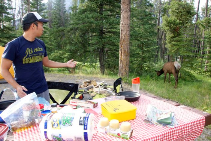 Giant deer in Banff campsite