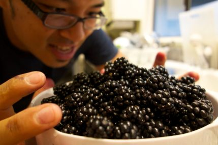 Picking our own blackberries