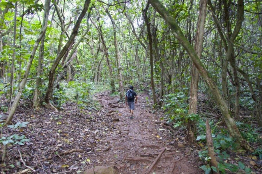 Olomana Hike - Oahu, Hawaii   Intentional Travelers
