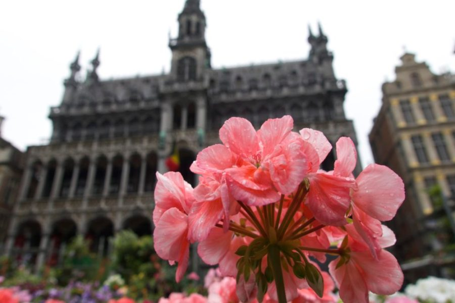 Grand Place / Grotte Markt | Self-Guided Walking Tour of Brussels, Belgium | Intentional Travelers