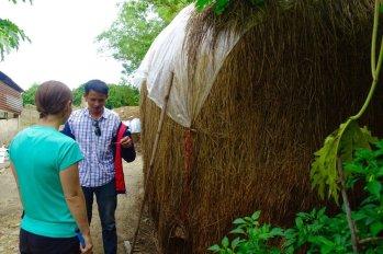 Phu explains how dried rice stalks are used to harvest mushrooms