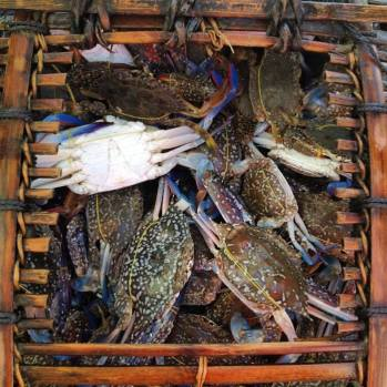 Crab market in Kep Photo Credit: Adam Greenberg