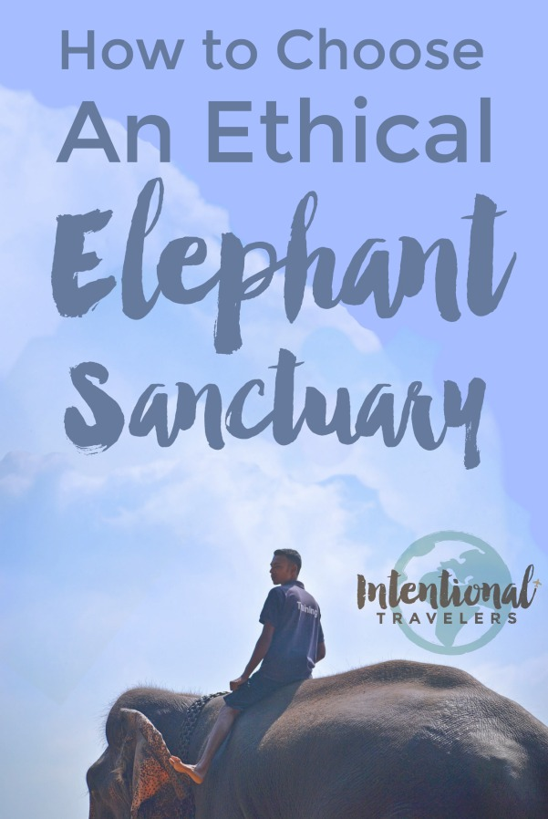 elephant sanctuary pin