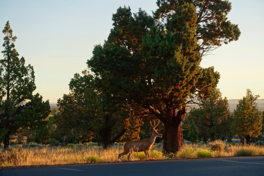 Top Things To Do In Redmond Oregon In Summer