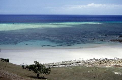 Comoros: coral reef
