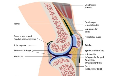 Interior anatomy of the knee full hd maps locations another anatomy of patella bone and spine knee and patella fat pad impingement causes and treatment uw health madison wi three quarter frontal view of the knee ccuart Choice Image