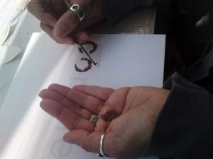 hand-seeds