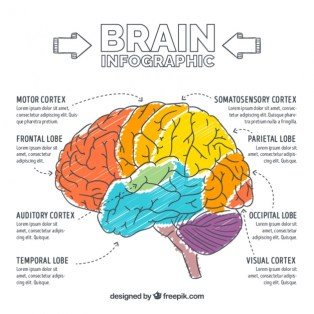 hand-painted-brain-infographic_23-2147598067