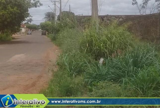 Mato toma conta de calçada no Santo Antônio