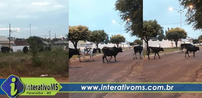 Vacas tomam conta de avenida em Paranaíba