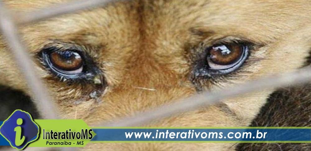 PM e ONG resgatam animal em situação de maus-tratos no Industrial de Lourdes