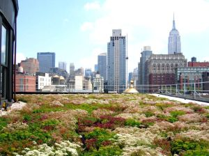 sedum green roof new york city