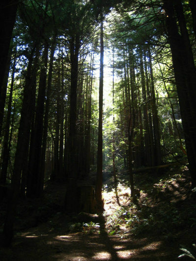 Pomo Canyon redwoods by t-dawg, on Flickr