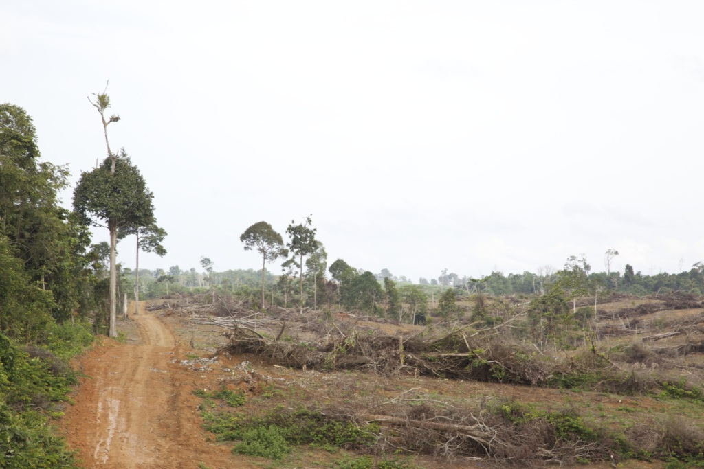 Forest cleared in October 2011 on Muara Tae customary land, in a concession issued to PT Munte Wani Jaya Perkasa (credit: EIA/Tom Johnson)