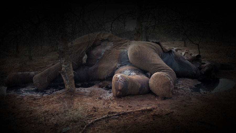 elephant-dead
