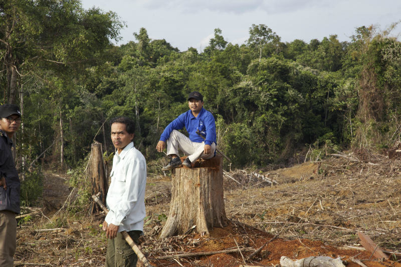 Muara Tae one - Asuy and Masrani, leaders of Muara Tae community view the remains of their forest cleared for an oil palm plantation (credit: EIA/Tom Johnson)