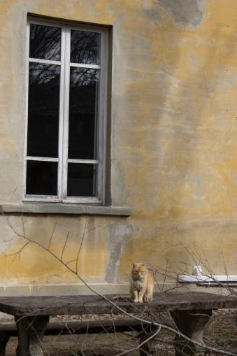 asylum with cat.jpg