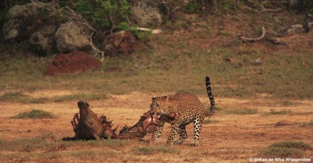 Yala National Park tourism sri lanka